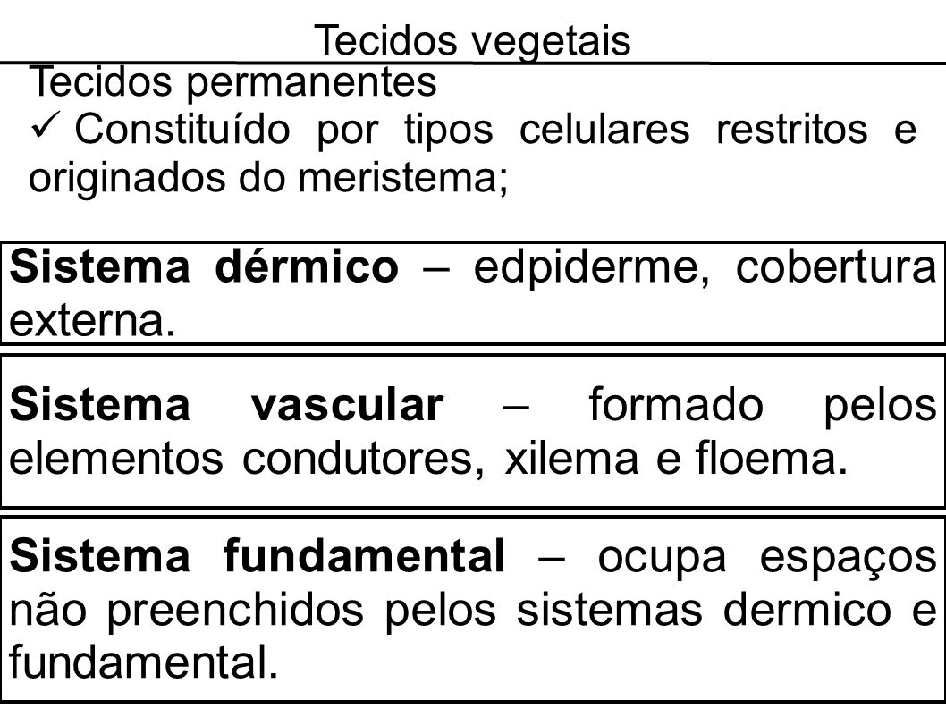 Sistema dérmico – edpiderme, cobertura externa.