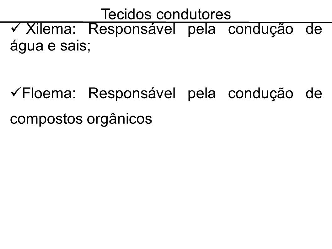 Tecidos condutores Xilema: Responsável pela condução de água e sais; Floema: Responsável pela condução de compostos orgânicos.