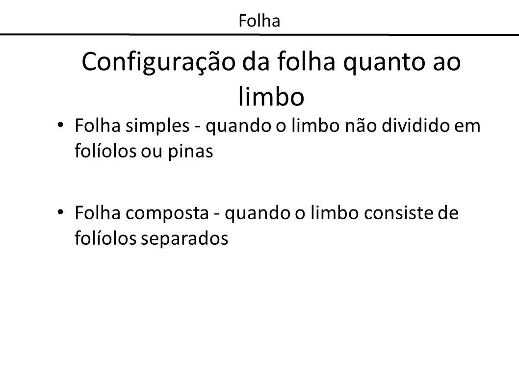 Configuração da folha quanto ao limbo