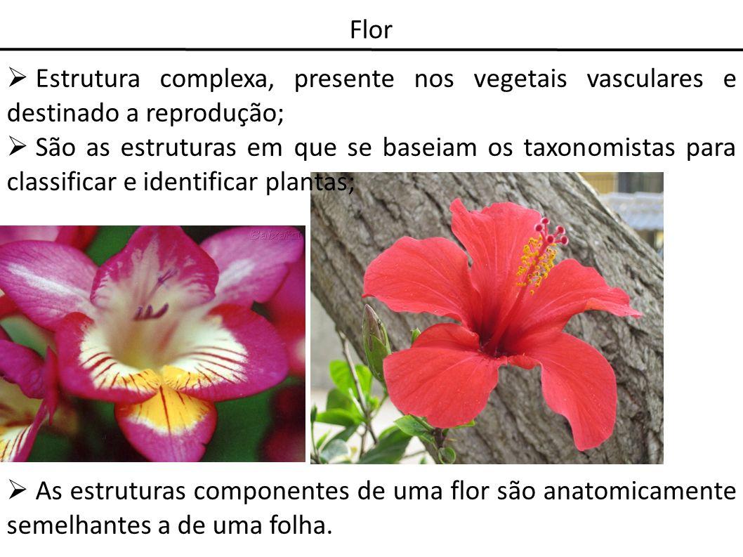 FlorEstrutura complexa, presente nos vegetais vasculares e destinado a reprodução;