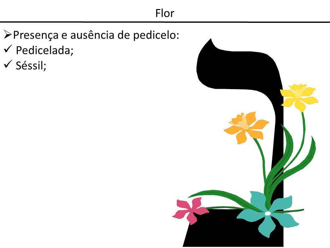 Presença e ausência de pedicelo: Pedicelada; Séssil;