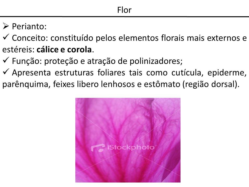 FlorPerianto: Conceito: constituído pelos elementos florais mais externos e estéreis: cálice e corola.