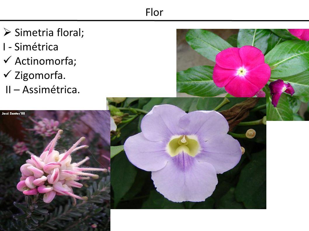Flor Simetria floral; I - Simétrica Actinomorfa; Zigomorfa. II – Assimétrica.