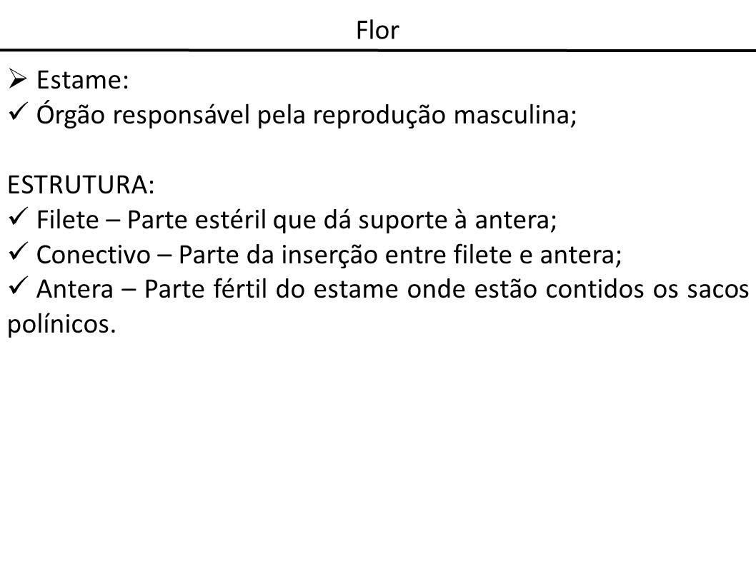 Flor Estame: Órgão responsável pela reprodução masculina; ESTRUTURA: Filete – Parte estéril que dá suporte à antera;