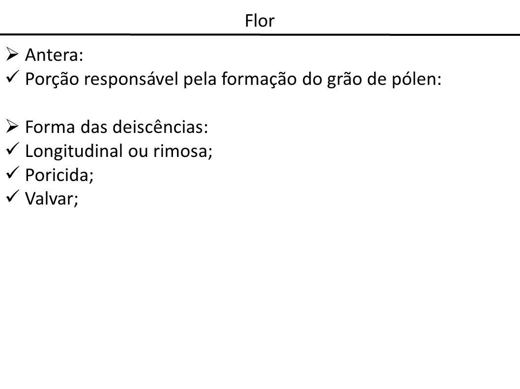 Flor Antera: Porção responsável pela formação do grão de pólen: Forma das deiscências: Longitudinal ou rimosa;