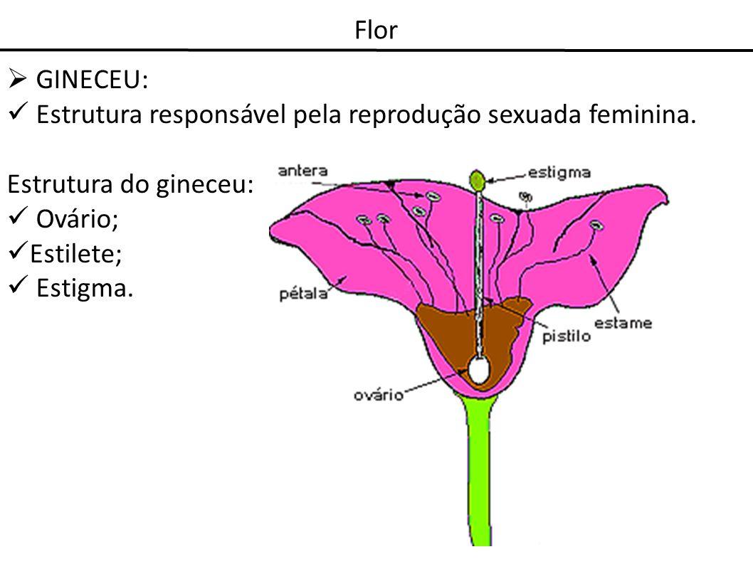 FlorGINECEU: Estrutura responsável pela reprodução sexuada feminina. Estrutura do gineceu: Ovário; Estilete;