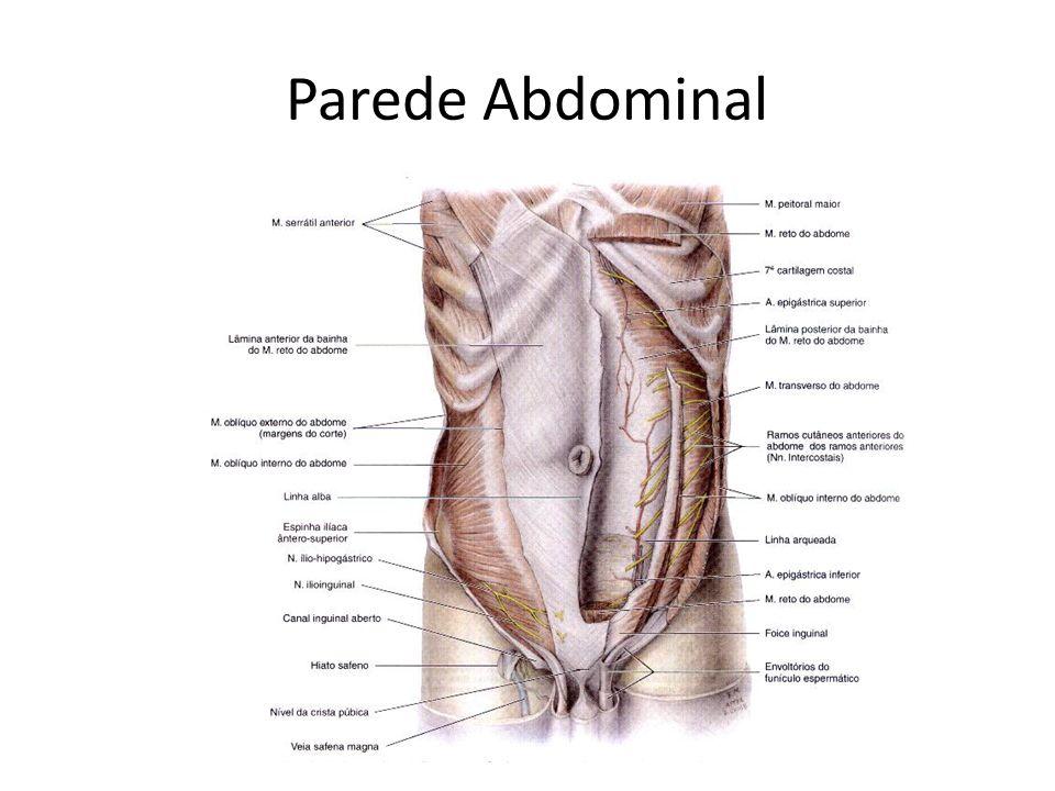 Parede Abdominal