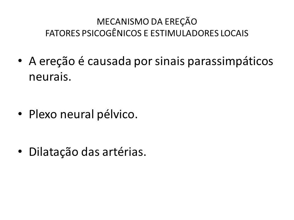 MECANISMO DA EREÇÃO FATORES PSICOGÊNICOS E ESTIMULADORES LOCAIS