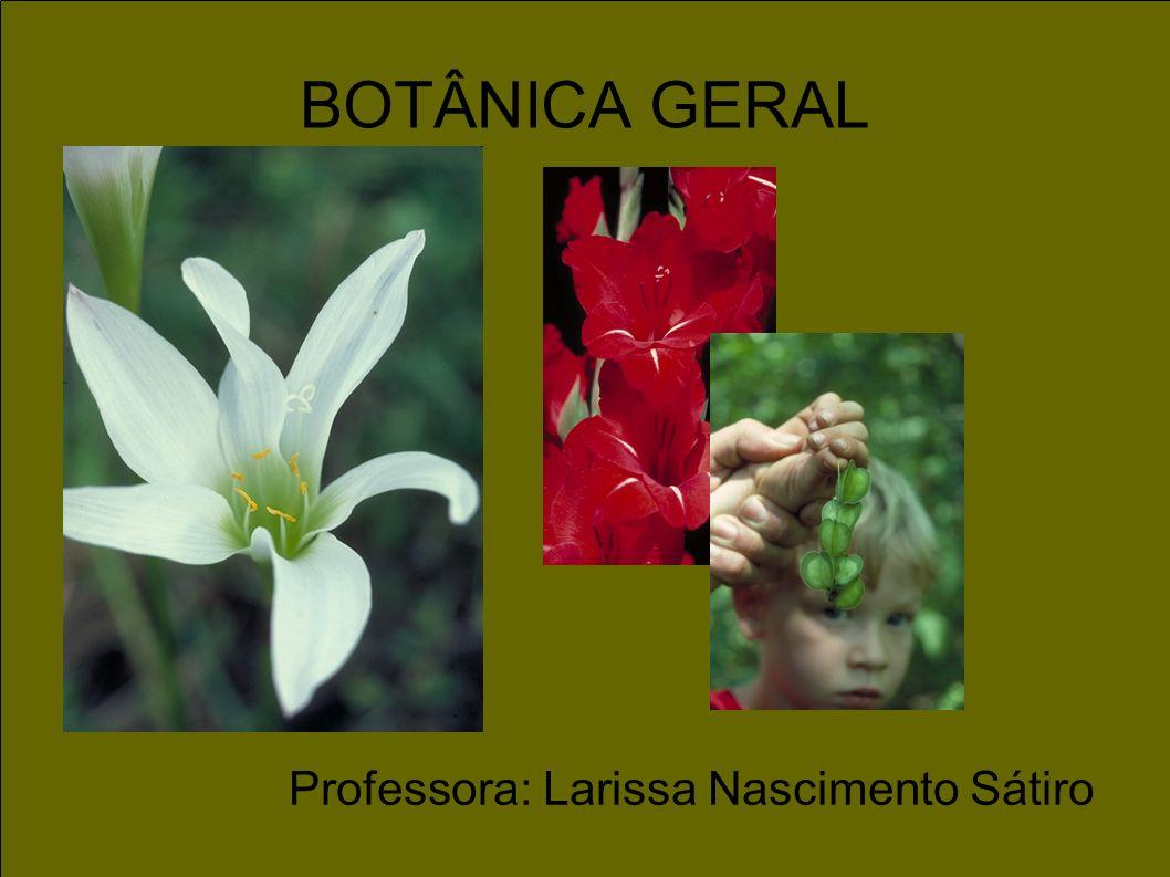 Professora: Larissa Nascimento Sátiro