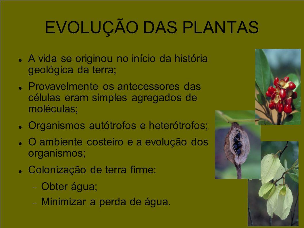 EVOLUÇÃO DAS PLANTAS A vida se originou no início da história geológica da terra;