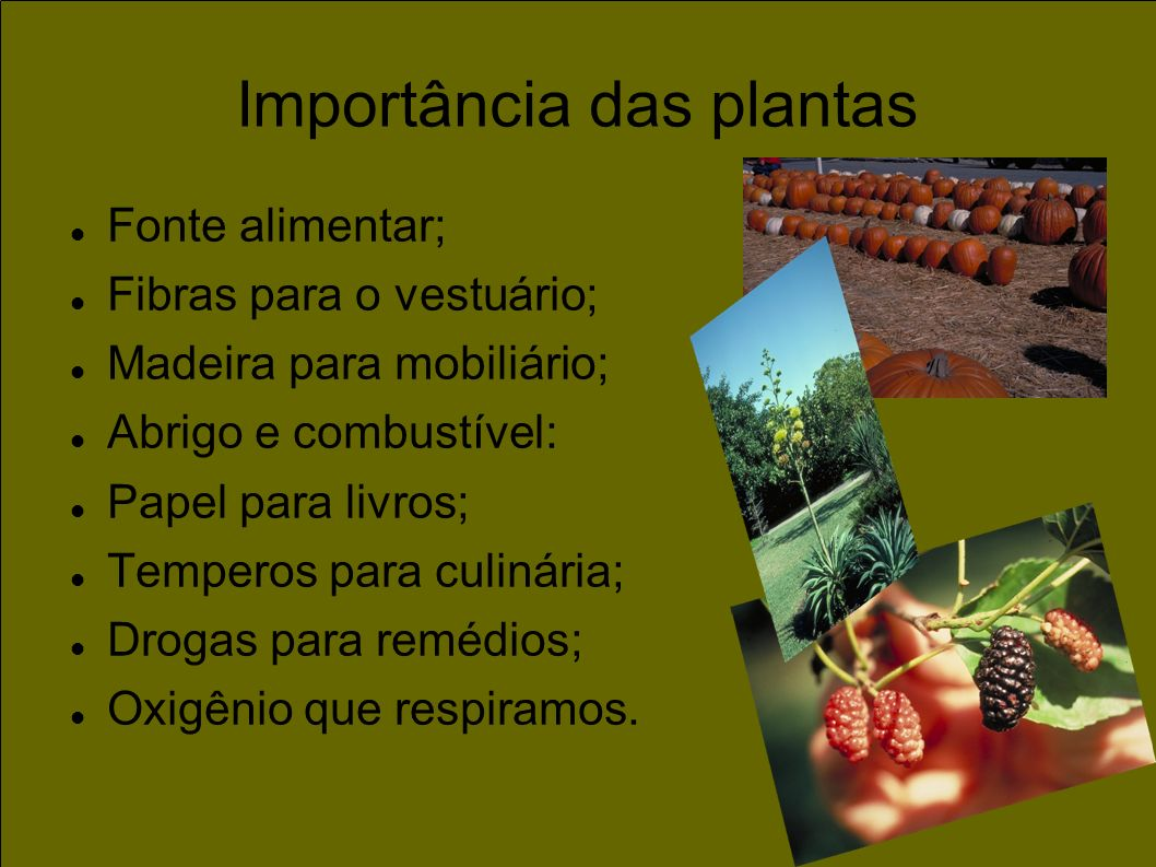 Importância das plantas