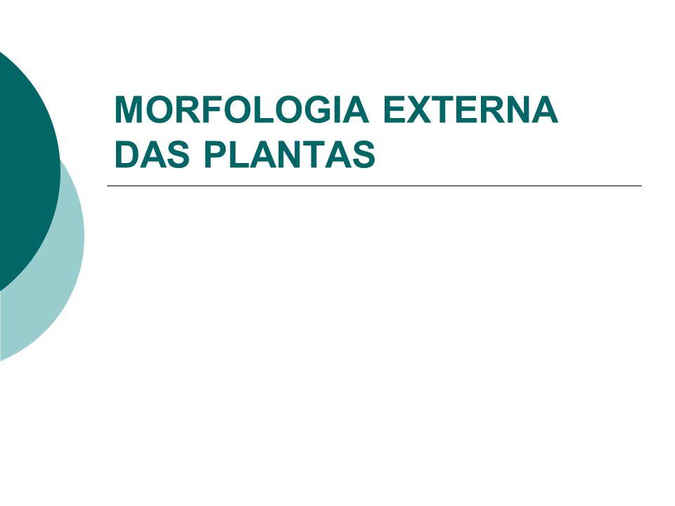 MORFOLOGIA EXTERNA DAS PLANTAS