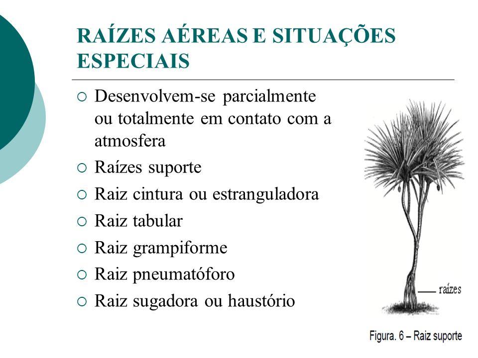 RAÍZES AÉREAS E SITUAÇÕES ESPECIAIS