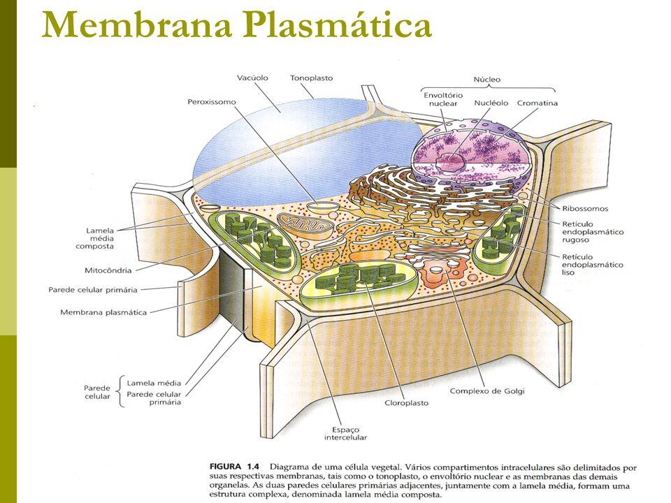 Membrana Plasmática Prof. Lusia Morais