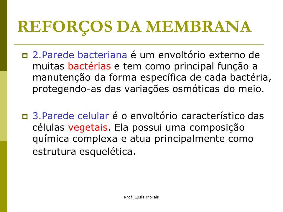 REFORÇOS DA MEMBRANA