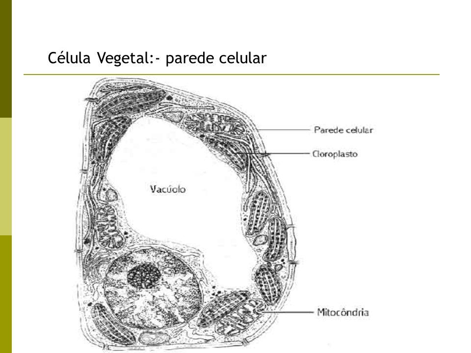 Célula Vegetal:- parede celular