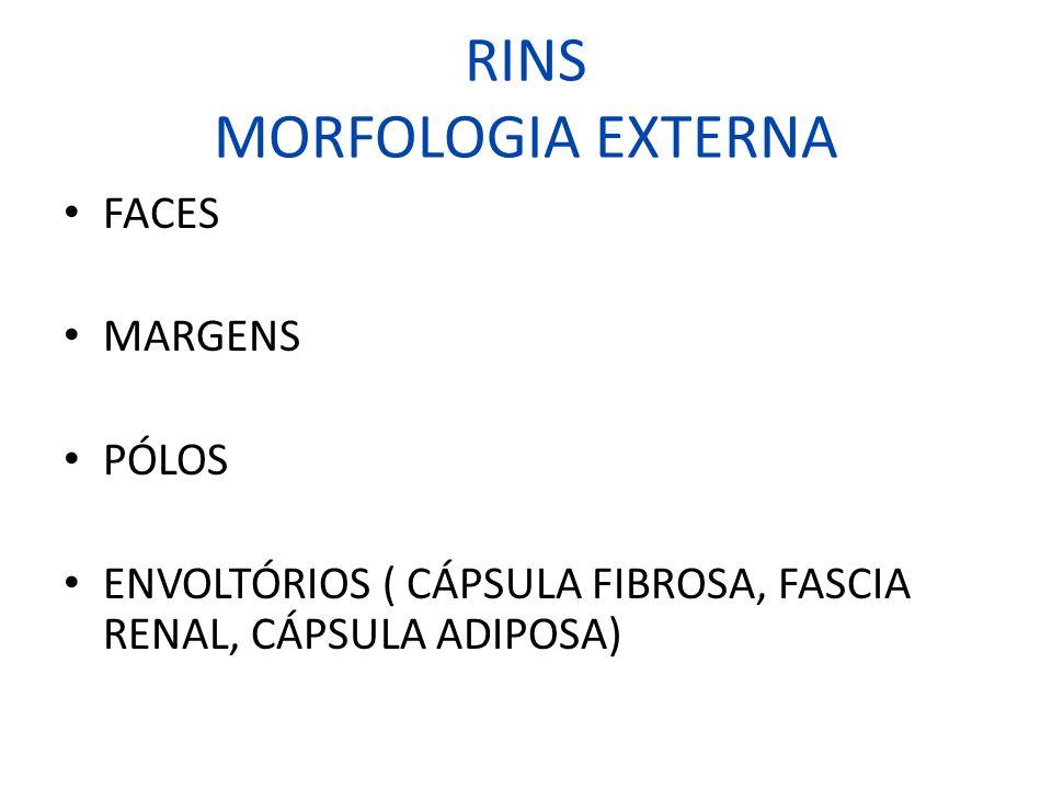 RINS MORFOLOGIA EXTERNA