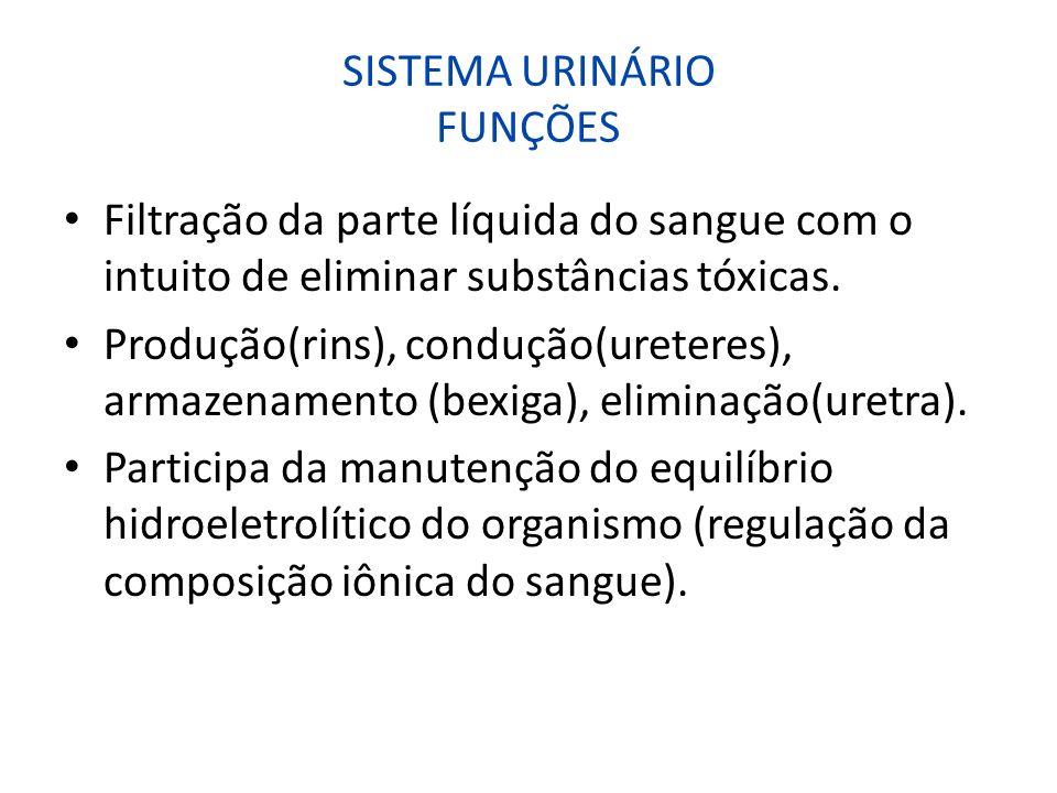 SISTEMA URINÁRIO FUNÇÕES