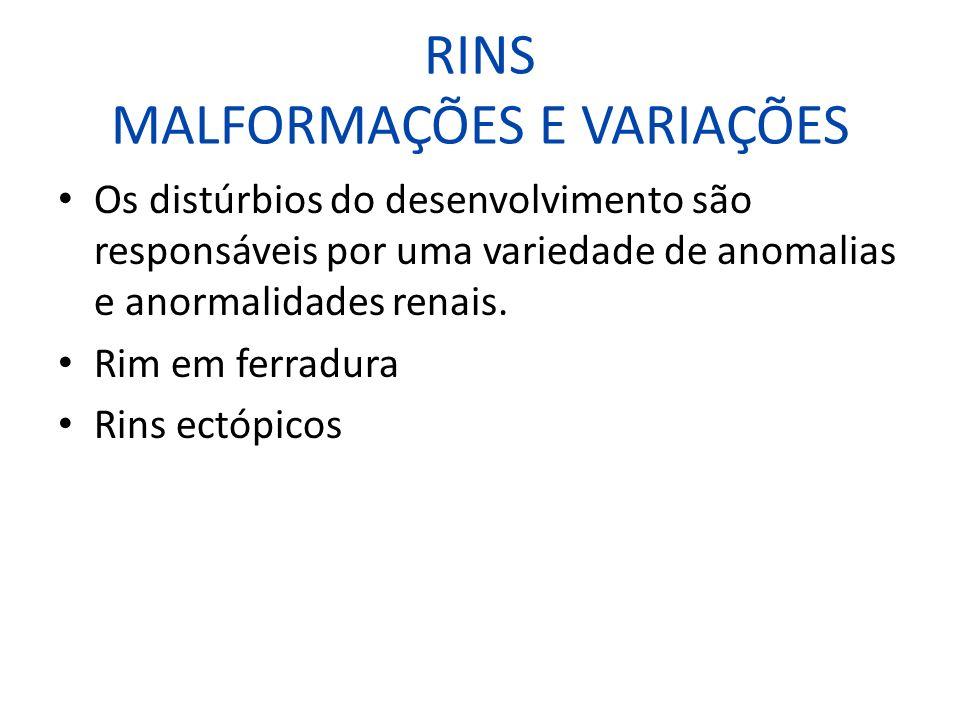 RINS MALFORMAÇÕES E VARIAÇÕES