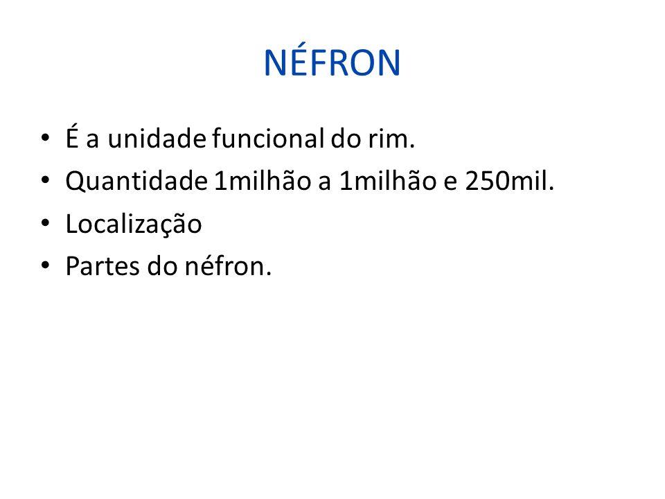 NÉFRON É a unidade funcional do rim.