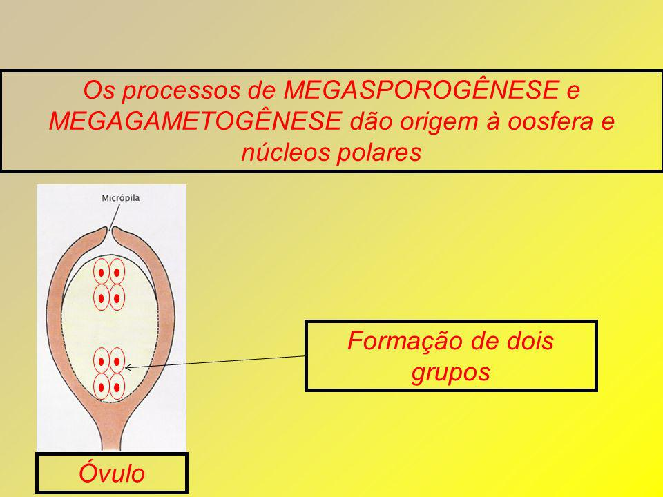 Formação de dois grupos