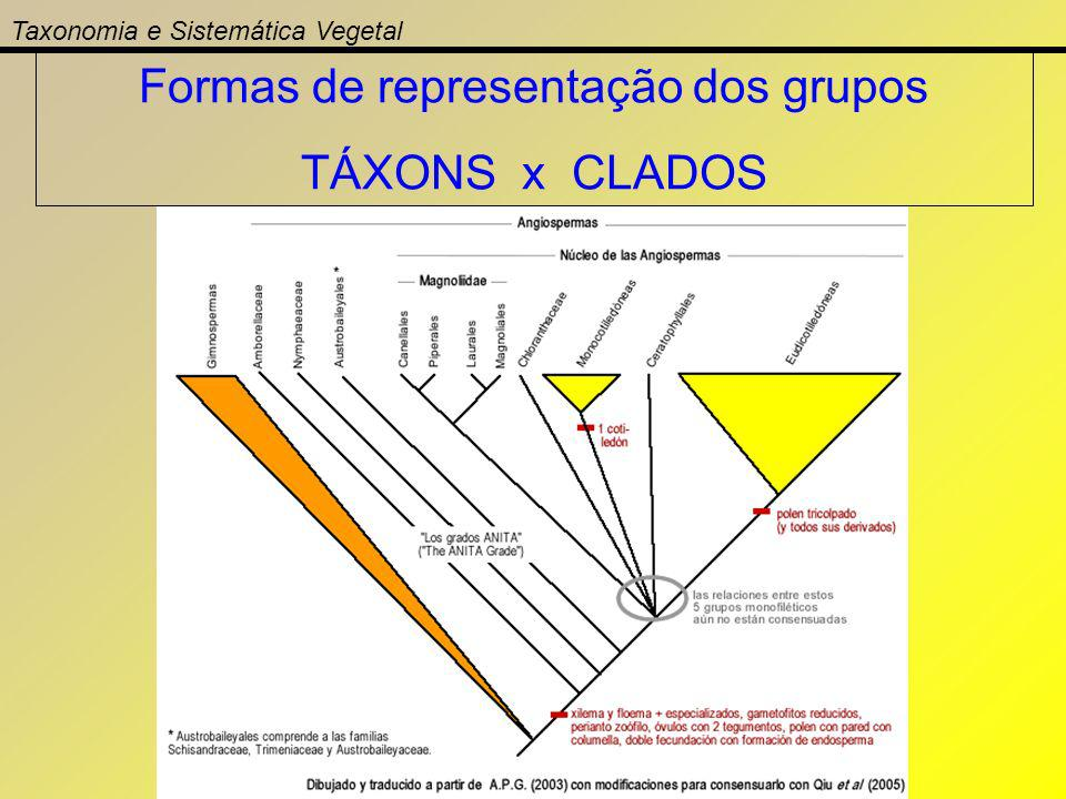 Formas de representação dos grupos