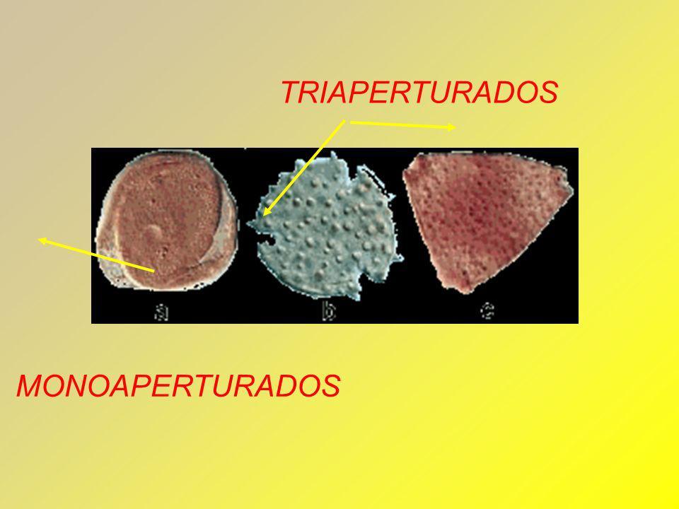 TRIAPERTURADOS MONOAPERTURADOS