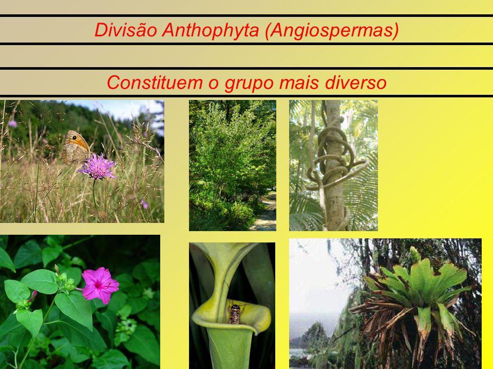 Divisão Anthophyta (Angiospermas)