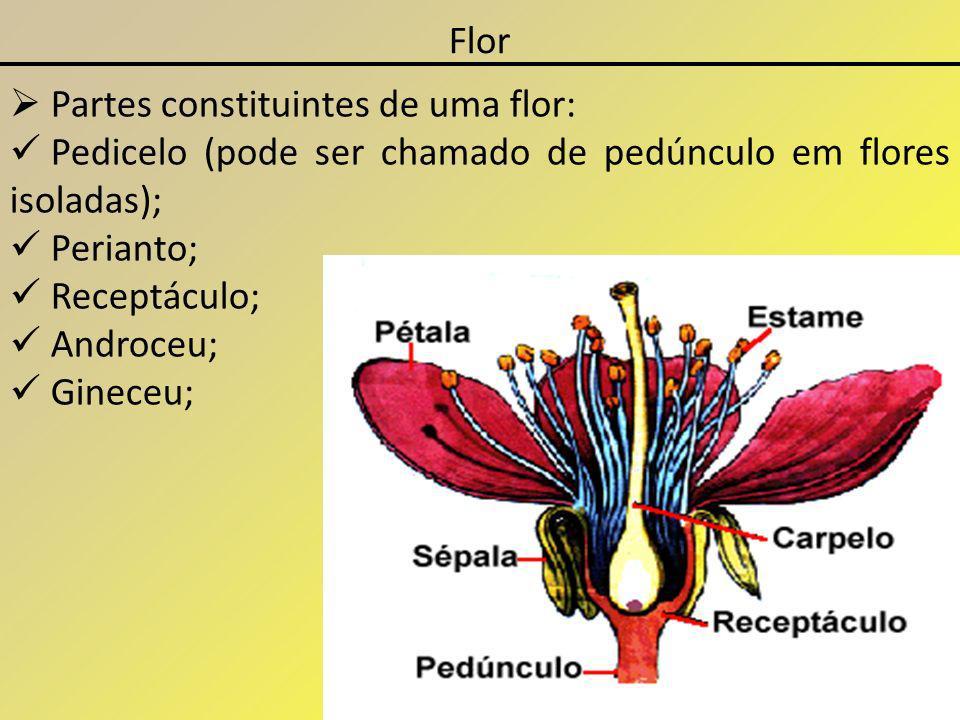 Flor Partes constituintes de uma flor: Pedicelo (pode ser chamado de pedúnculo em flores isoladas);