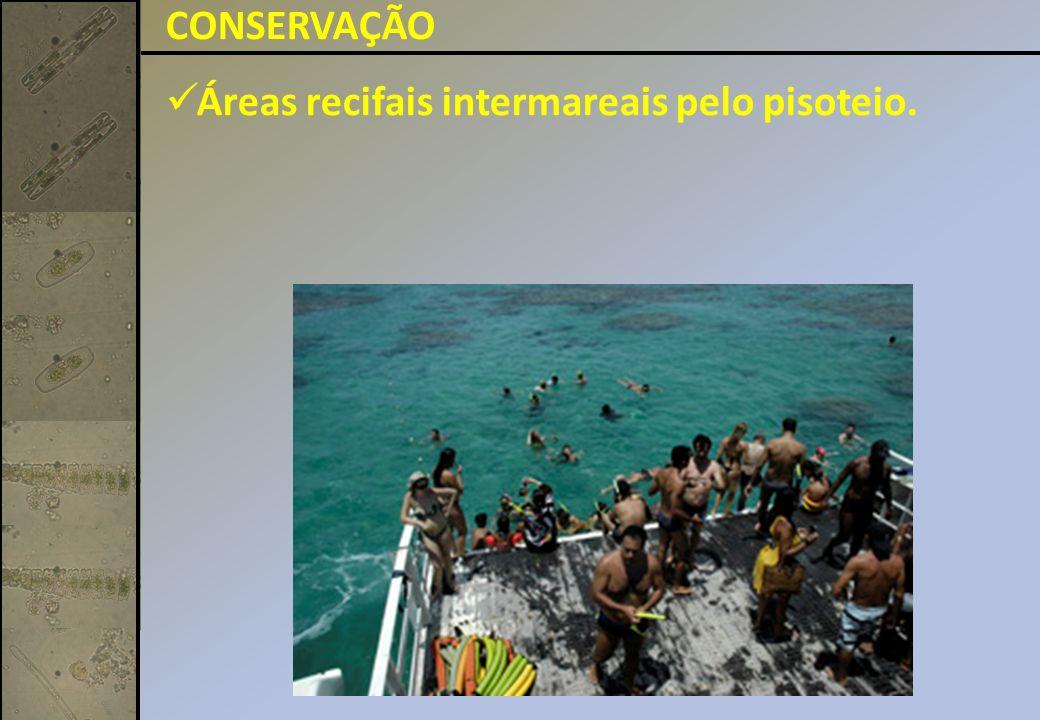 CONSERVAÇÃO Áreas recifais intermareais pelo pisoteio.