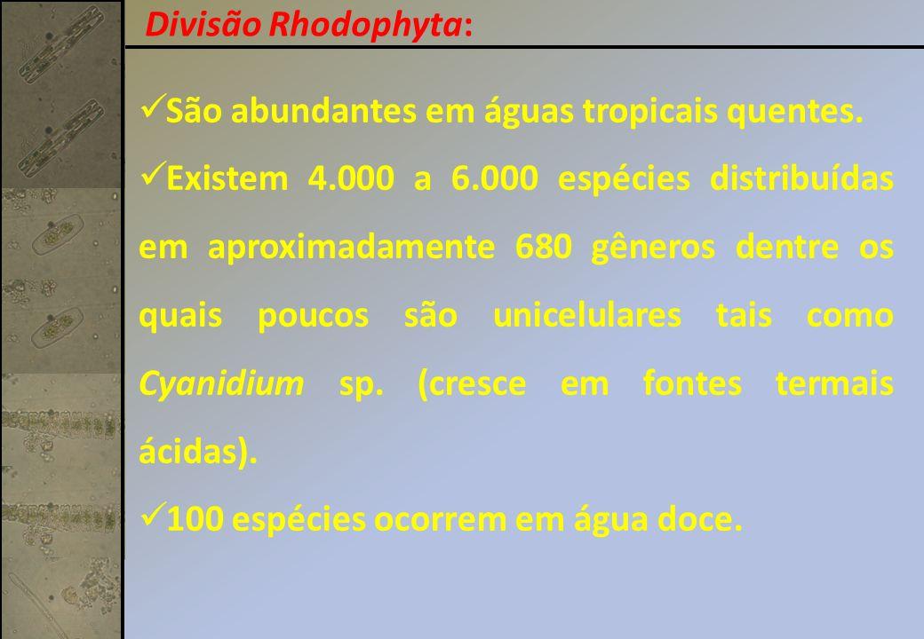 Divisão Rhodophyta: São abundantes em águas tropicais quentes.