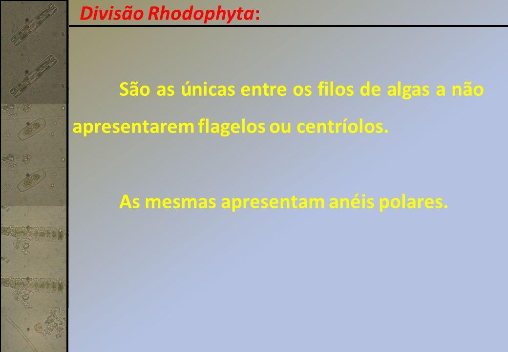 Divisão Rhodophyta: São as únicas entre os filos de algas a não apresentarem flagelos ou centríolos.