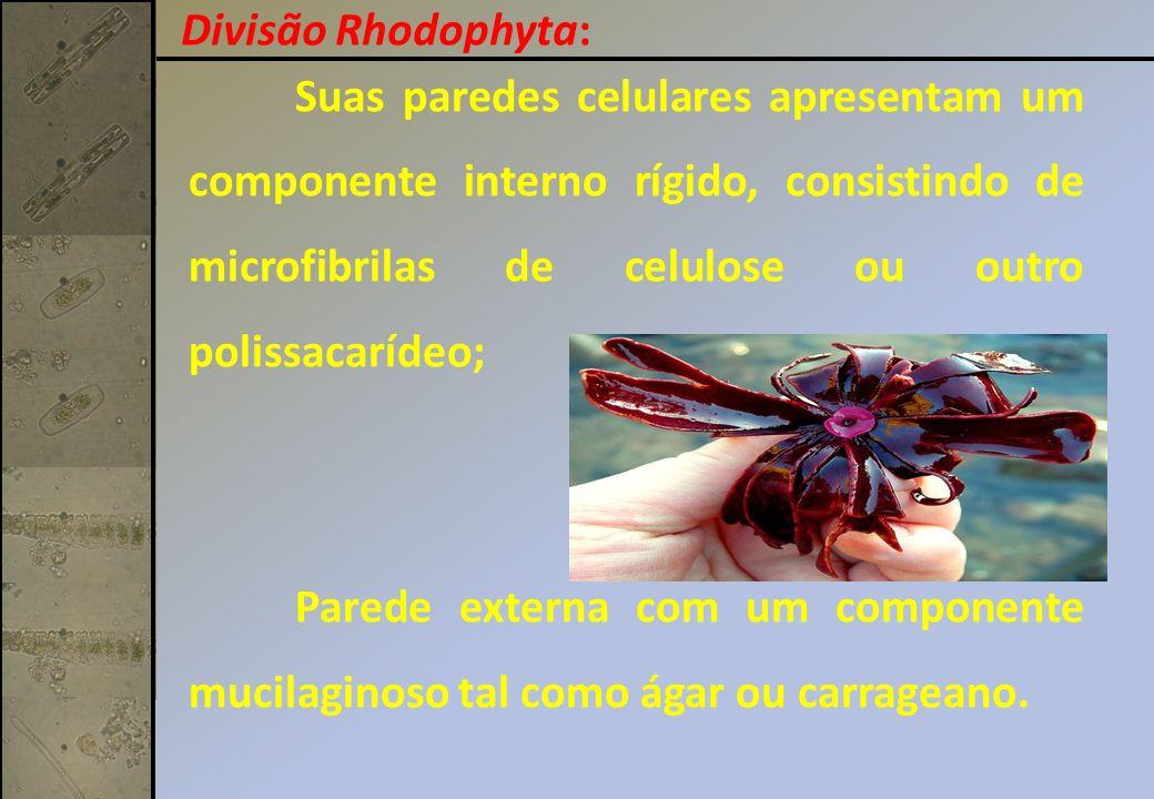Divisão Rhodophyta: Suas paredes celulares apresentam um componente interno rígido, consistindo de microfibrilas de celulose ou outro polissacarídeo;
