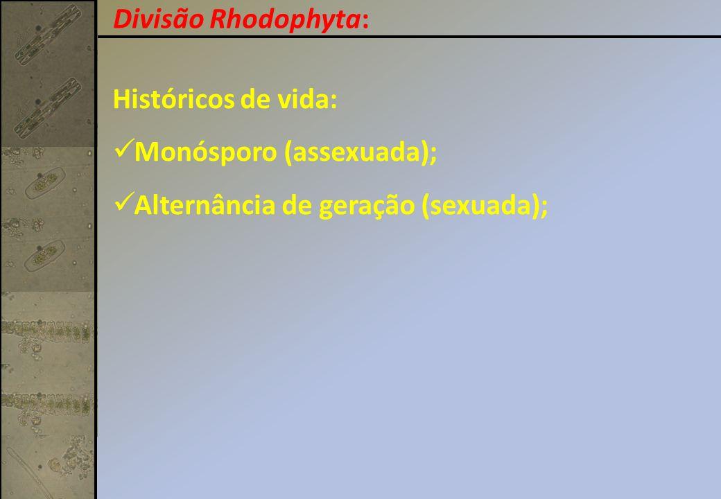 Divisão Rhodophyta: Históricos de vida: Monósporo (assexuada); Alternância de geração (sexuada);