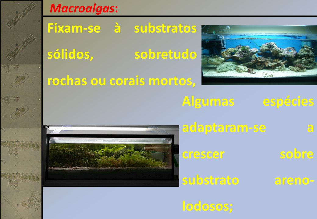Fixam-se à substratos sólidos, sobretudo rochas ou corais mortos,