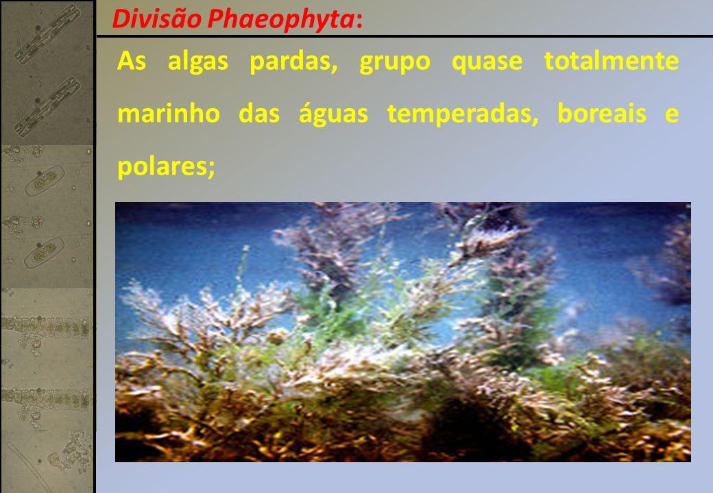 As algas pardas, grupo quase totalmente marinho das águas temperadas, boreais e polares;