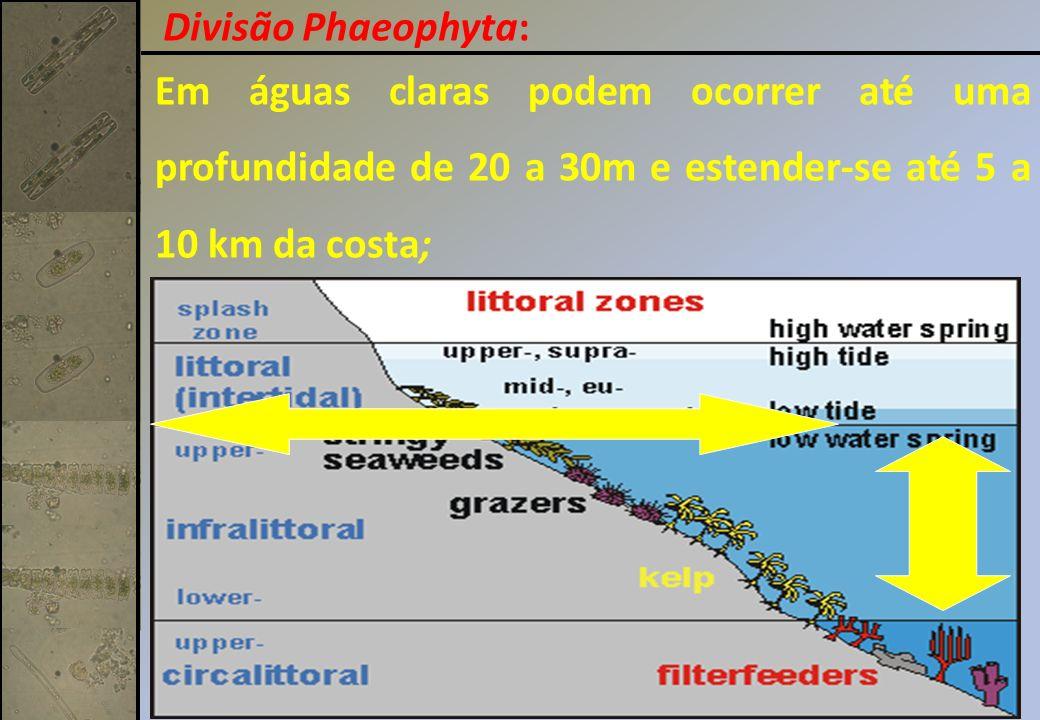 Divisão Phaeophyta: Em águas claras podem ocorrer até uma profundidade de 20 a 30m e estender-se até 5 a 10 km da costa;