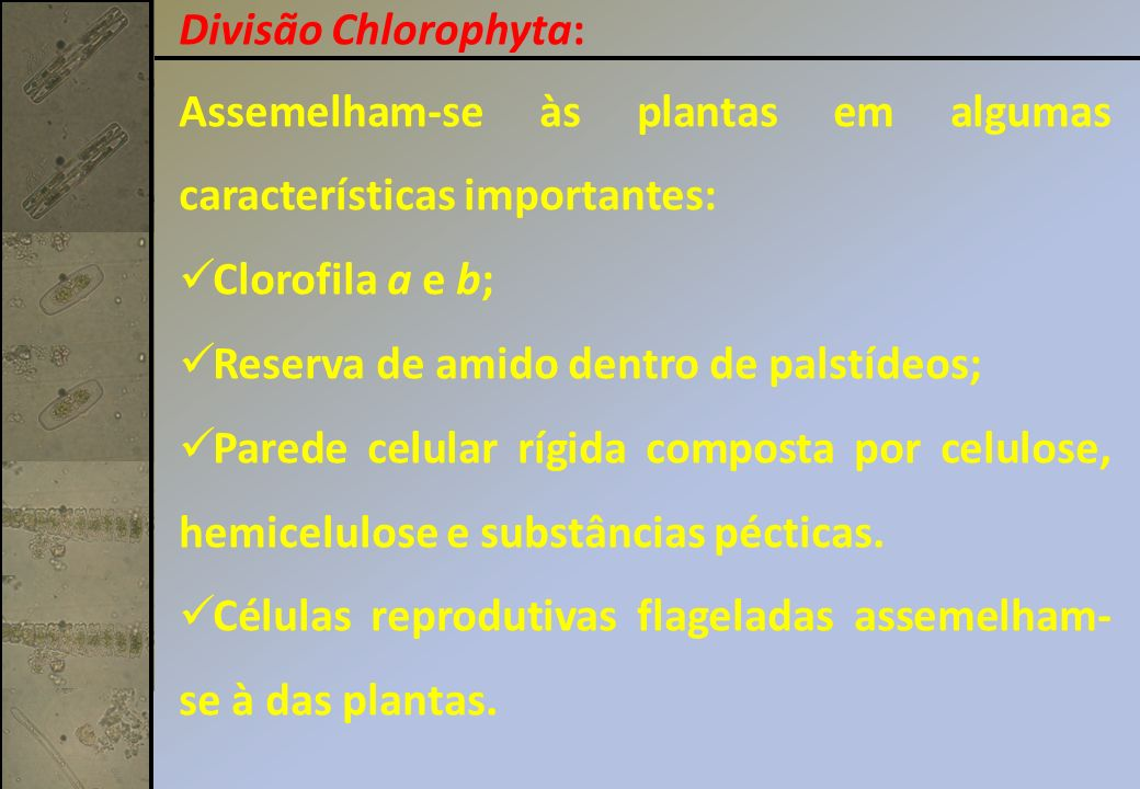 Divisão Chlorophyta: Assemelham-se às plantas em algumas características importantes: Clorofila a e b;