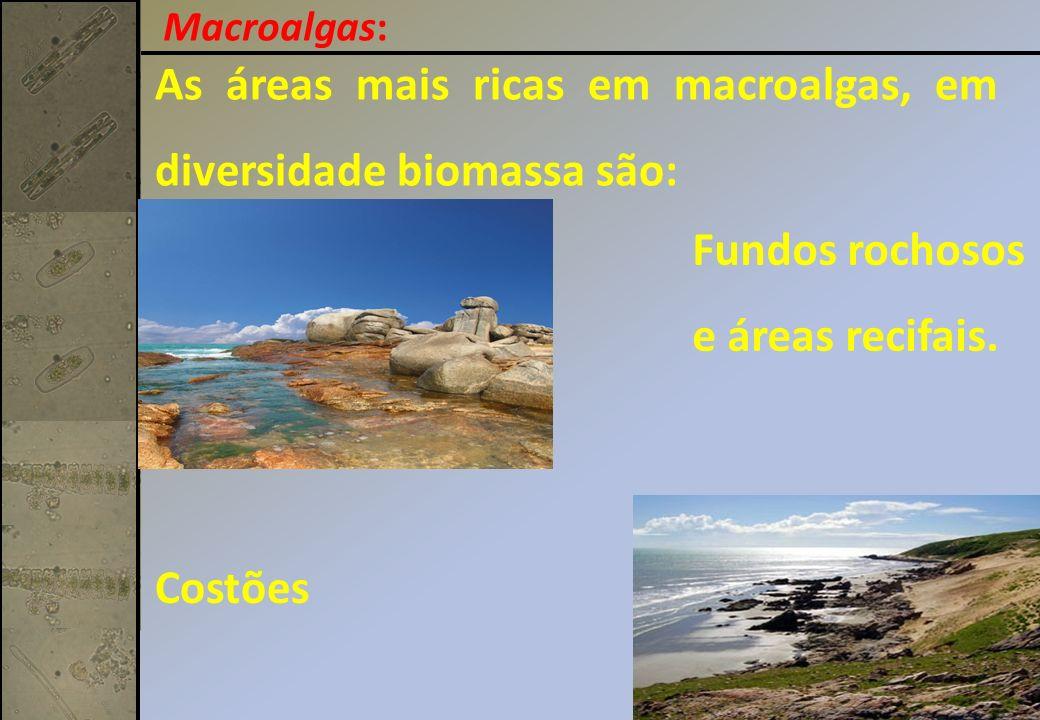 As áreas mais ricas em macroalgas, em diversidade biomassa são: