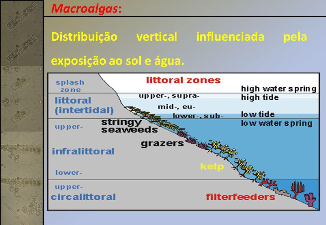 Macroalgas: Distribuição vertical influenciada pela exposição ao sol e água.