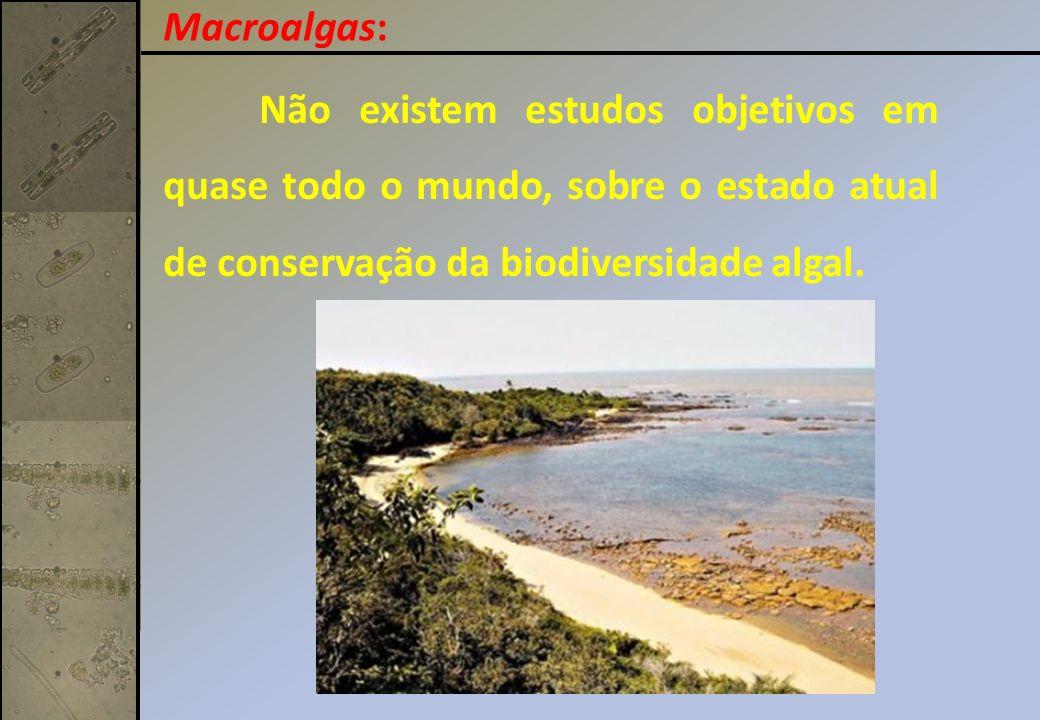 Macroalgas: Não existem estudos objetivos em quase todo o mundo, sobre o estado atual de conservação da biodiversidade algal.