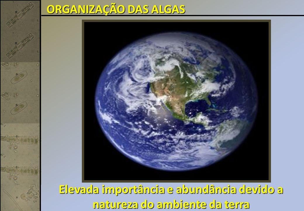 ORGANIZAÇÃO DAS ALGAS Elevada importância e abundância devido a natureza do ambiente da terra