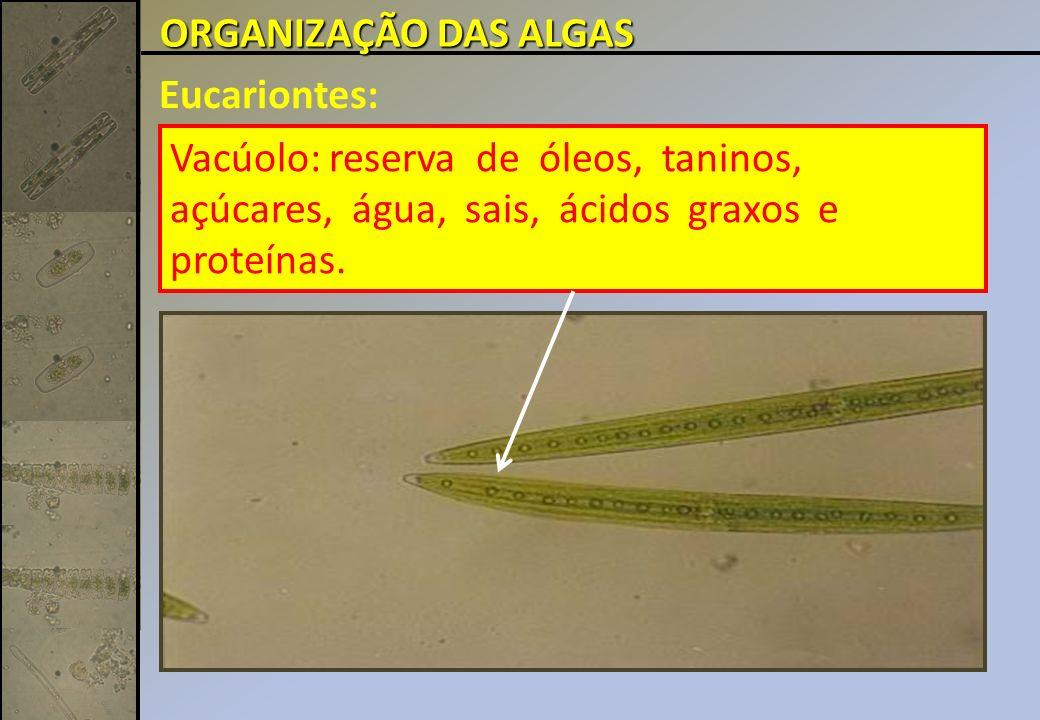ORGANIZAÇÃO DAS ALGAS Eucariontes: Vacúolo: reserva de óleos, taninos, açúcares, água, sais, ácidos graxos e proteínas.