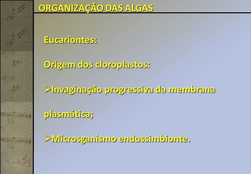 ORGANIZAÇÃO DAS ALGAS Eucariontes: Origem dos cloroplastos: Invaginação progressiva da membrana plasmática;