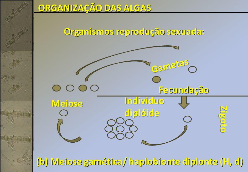 ORGANIZAÇÃO DAS ALGAS Organismos reprodução sexuada: Gametas. Fecundação. Indivíduo. diplóide. Meiose.