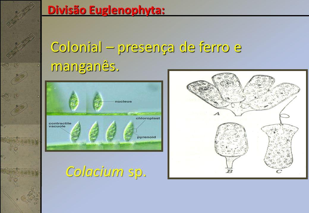 Colonial – presença de ferro e manganês.