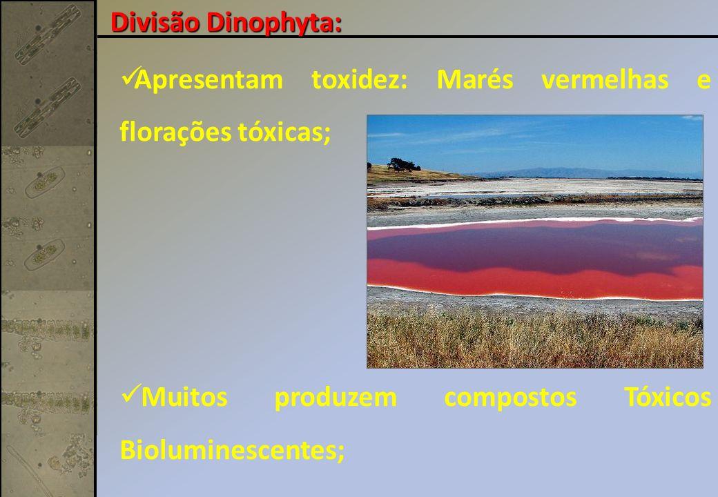 Divisão Dinophyta: Apresentam toxidez: Marés vermelhas e florações tóxicas; Muitos produzem compostos Tóxicos Bioluminescentes;