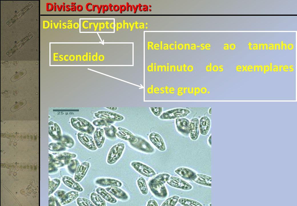 Divisão Cryptophyta: Divisão Cryptophyta: Relaciona-se ao tamanho diminuto dos exemplares deste grupo.