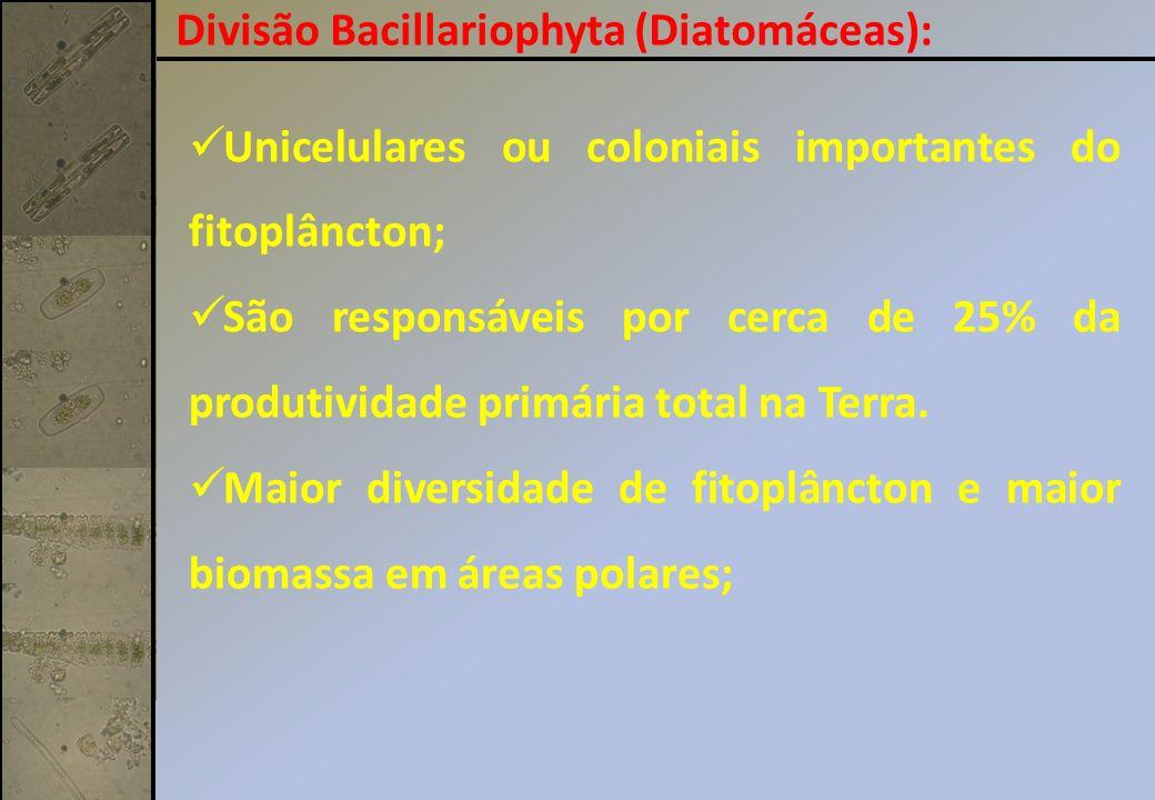 Divisão Bacillariophyta (Diatomáceas):