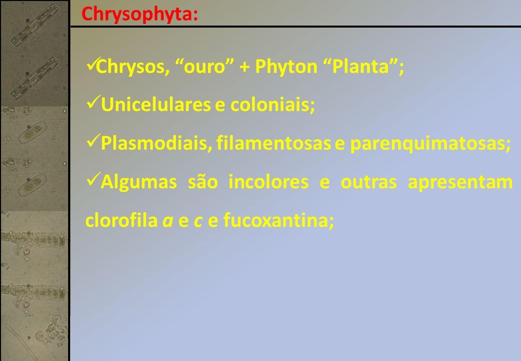 Chrysophyta: Chrysos, ouro + Phyton Planta ; Unicelulares e coloniais; Plasmodiais, filamentosas e parenquimatosas;